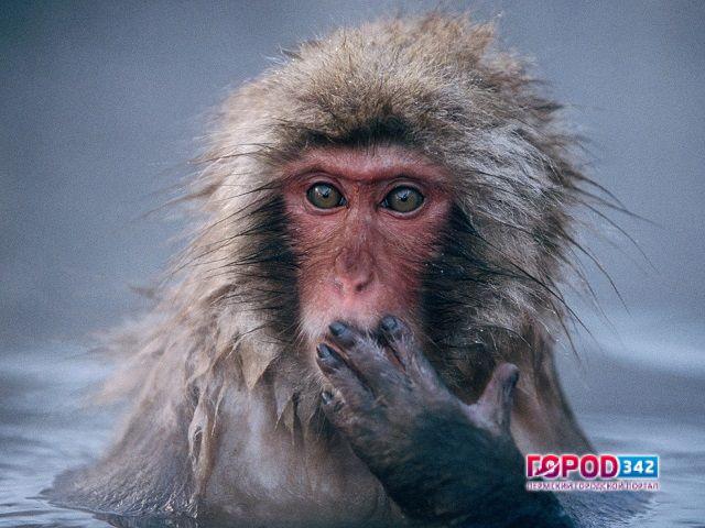 Насодержание нового пермского зоопарка потребуется неменее 500 млн руб. вгод