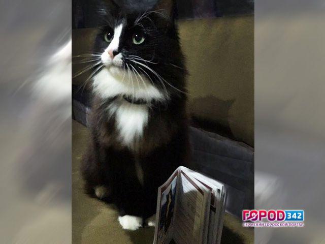 Найден пропавший в столице России кот Семен
