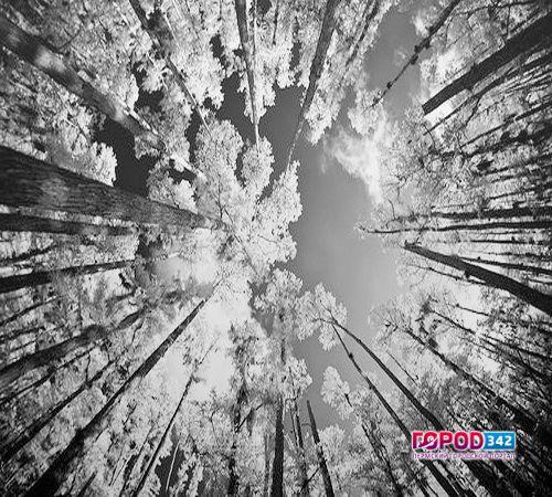 ВЧерняевском лесу впроцессе прогулки пермяк отыскал человеческие останки